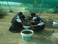 Our Eco Club has been inaugurated by preparing seed balls.